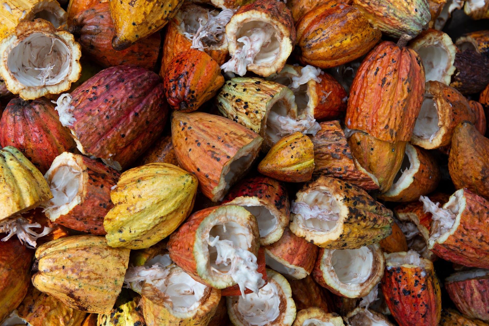Le cacao a des effets positifs sur le cerveau
